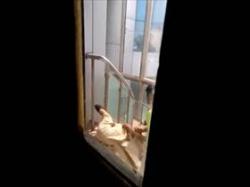 【素人盗撮】病院のスタッフか?野外の階段のベランダで彼女のアソコ弄ってるカップルの様子を同僚が撮影流出の画像