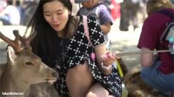 【パンチラ盗撮動画】鹿のいる公園…自撮り棒で撮影しながらパンティーが丸見えになってる女性を発見!の画像