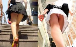 階段パンチラ!犬目線で女子のスカート内が丸見え画像の画像